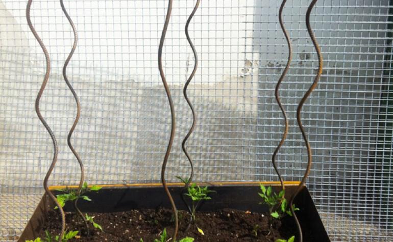 Pali a Spirale in acciaio per Pomodori
